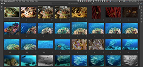 An Underwater Photographer's Guide to Lightroom CC 2017 Photo