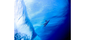 Underwater photos of surfers by Lucia Griggi Photo