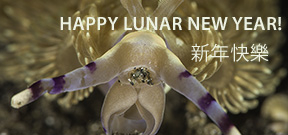 Happy lunar New Year for the Year of the Sheep Photo