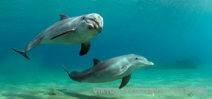 Book release: 100 Facts About Dolphins Photo