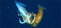 A new study explores the deep sea food chain Photo