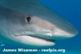 Write to Continue Ban on Shark Finning Photo