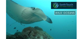 Video: Earth Touch Manta Ray somersaults Photo