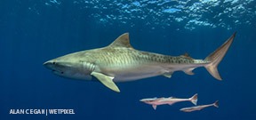 Alan C Egan: Men are from Mars, Women are from Venus but Jupiter has tiger sharks Photo