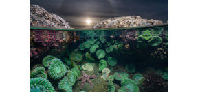 National Geographic publishes best underwater images of 2016 Photo