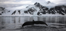 How whale species are adapting to changing ice in the Antarctic Photo
