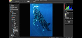 Nikon releases NX-D image processing software Photo