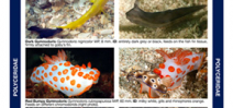 Reef ID Books releases Coral Triangle Nudibranch guide Photo