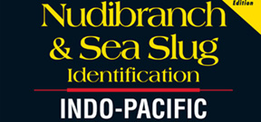 Indo-Pacific Nudibranch guide updated Photo