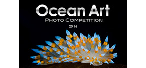 2016 Ocean Art Winners announced Photo