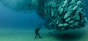 Reminder: Our World Underwater competition 2014 Photo