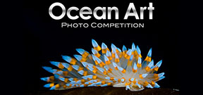 Call for entries: Ocean Art 2015 Photo