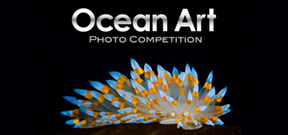 Ocean Art 2018 is calling for entries Photo