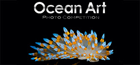 Final call: Ocean Art 2013 Photo