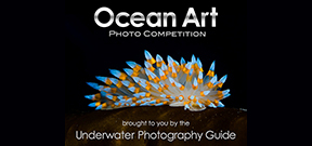 Call for entries: Ocean Art 2013 Photo