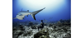 Freediving underwater photos Photo