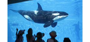 California governor Brown signs legislation that bans Orca captivity Photo