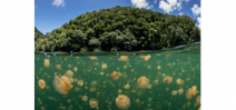 A paper shows the positive impact of the marine reserve in Palau Photo