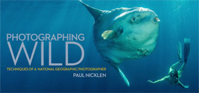 National Geographic photographer Paul Nicklen releases eBook Photo