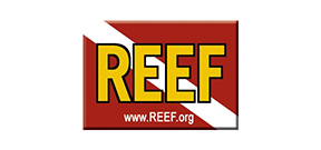 REEF to hold festival in Key Largo Photo