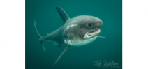 Ron Watkins: Salmon Shark - Behind the Shot Photo