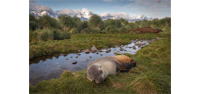 Invasive rats have been successfully eradicated from Antarctic Island Photo