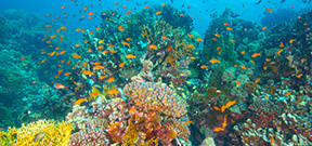 Australian Government announces funding for Great Barrier Reef Photo