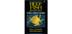 New edition of Florida, Caribbean and Bahamas fish ID book published Photo