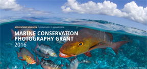 Save Our Seas launches conservation photography grant Photo