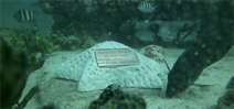 People are opting for their remains to be used in building artificial reefs Photo