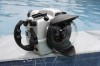 Seacam Nikon D2x Housing Field Report and Review Photo