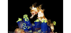Guylian announces 7th Seahorse underwater photography competition Photo