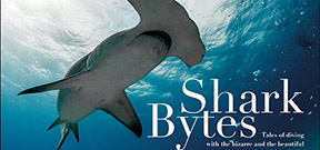 Introducing Shark Bytes by John Bantin Photo