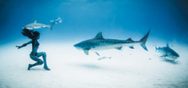 Tigress Shark: Shawn Heinrichs and Hannah Fraser's latest collaboration Photo