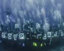 Report: Silence of the Sharks Photo