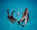Article: Brian Skerry's dolphin images from National Geographic Photo