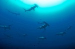 New MPA announced for Cocos Islands Photo
