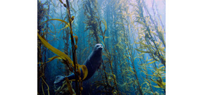 University of Miami announces its 2013 Underwater Photography Contest results Photo