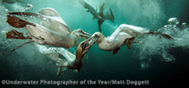 Final Call: Underwater Photographer of the Year 2016 Photo