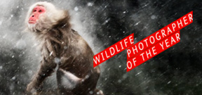 NHM Wildlife Photographer of the Year Awards Photo