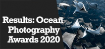 Wetpixel Live: Ocean Photography Awards 2020 Photo