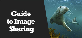 Wetpixel Live: Sharing Underwater Images Photo