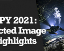 Wetpixel Live: Image Highlights of UPY 2021 Photo