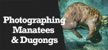 Wetpixel Live: Photographing Manatees and Dugongs Photo