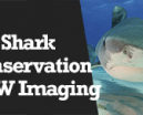 Wetpixel Live: Shark Conservation and Underwater Imaging Photo