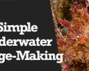 Wetpixel Live: Simple Underwater Image Making Photo