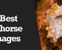 Wetpixel Live: 5 Best Seahorse Images Photo