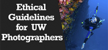 Wetpixel Live: Ethical Guidelines for Underwater Photographers Photo