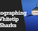 Wetpixel Live: Photographing Whitetip Sharks Photo