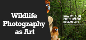 Wetpixel Live: How Wildlife Photography Became Art Photo